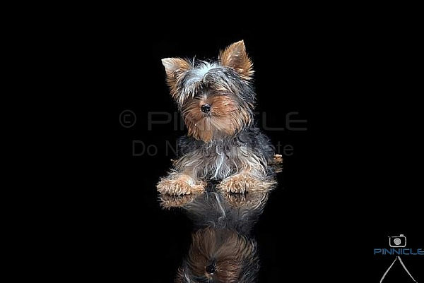 Studio Portraits - J Drake -  Picton NSW - 26 Dec 2018