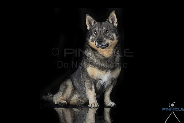 Studio Portraits - Ryan, Kelsey, Exx, Lyria & March -  Picton NSW - 14 June 2020