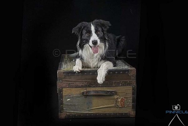Studio Portraits - Jessie -  Picton NSW - 14 Feb 21