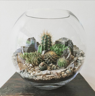 Desert World Terrarium For Jon Pearce Pledgeme