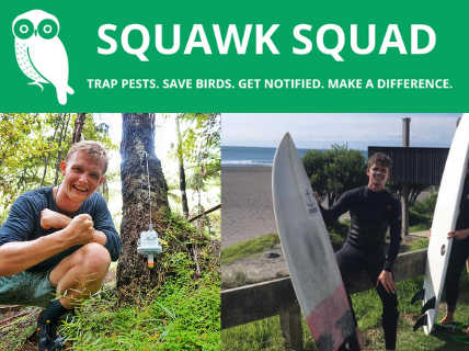 Surf Lesson & Native Bird Kōrero With Squawk Squad
