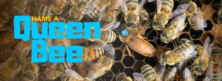 Name A Queen Bee