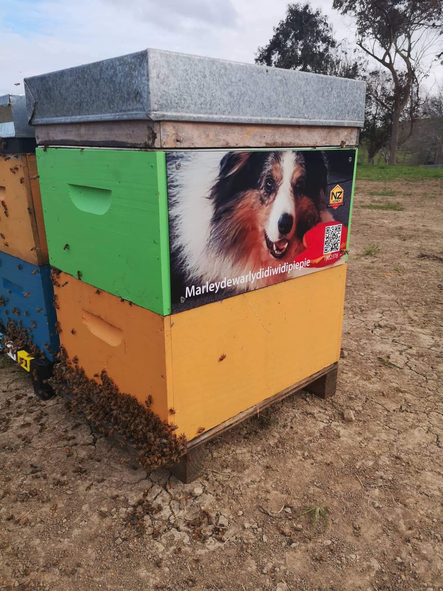 Name A Beehive