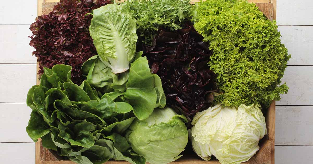 20 Pack Leafy Green Pack For Charity Of Our Choice