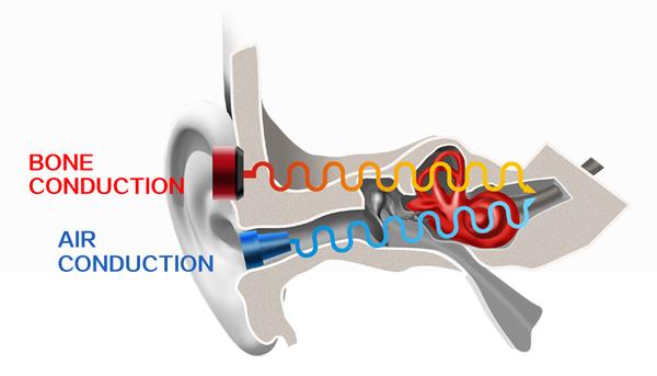 BonePhonez physiology