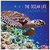 ocean life calendar