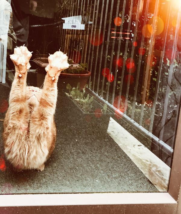 Freddie the yoga cat