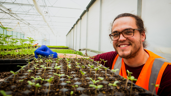 Cultivation Manager Guy Randall with Puro's first seedlings.