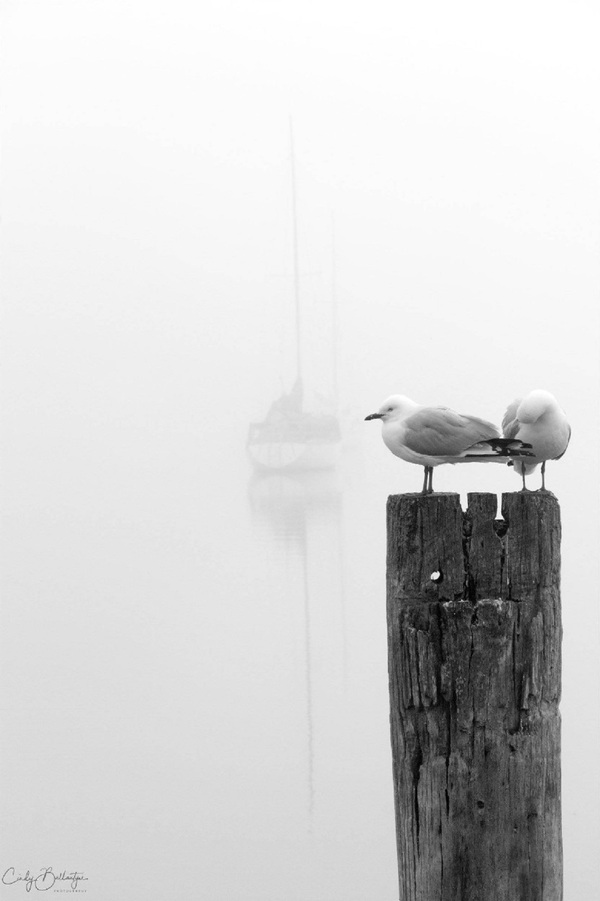Yacht's Moored in the Fog