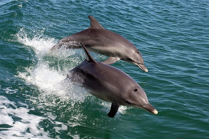 1Hr Dolphin Cruise w/lunch x 2 Adults