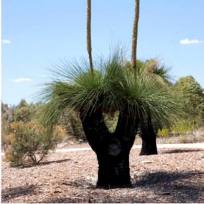 Grass tree voucher valued up to $10,000