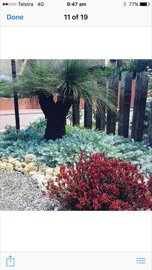Grass tree voucher valued at $5,000