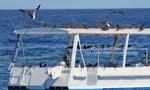 Flock of birds on beach at Michaelmas Cay, in Far North Queensland