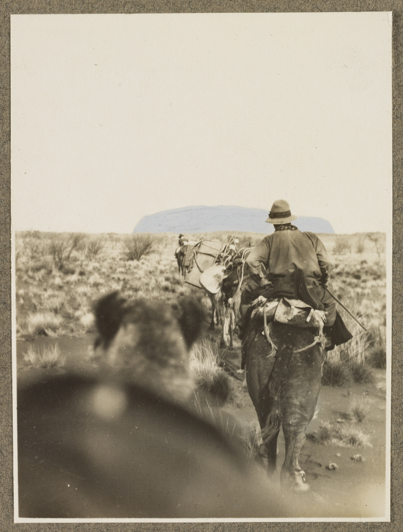 Man wearing a had with camping equipment riding a camel with a horse in front in shrubby in front of Uluru (Ayers Rock), Australia