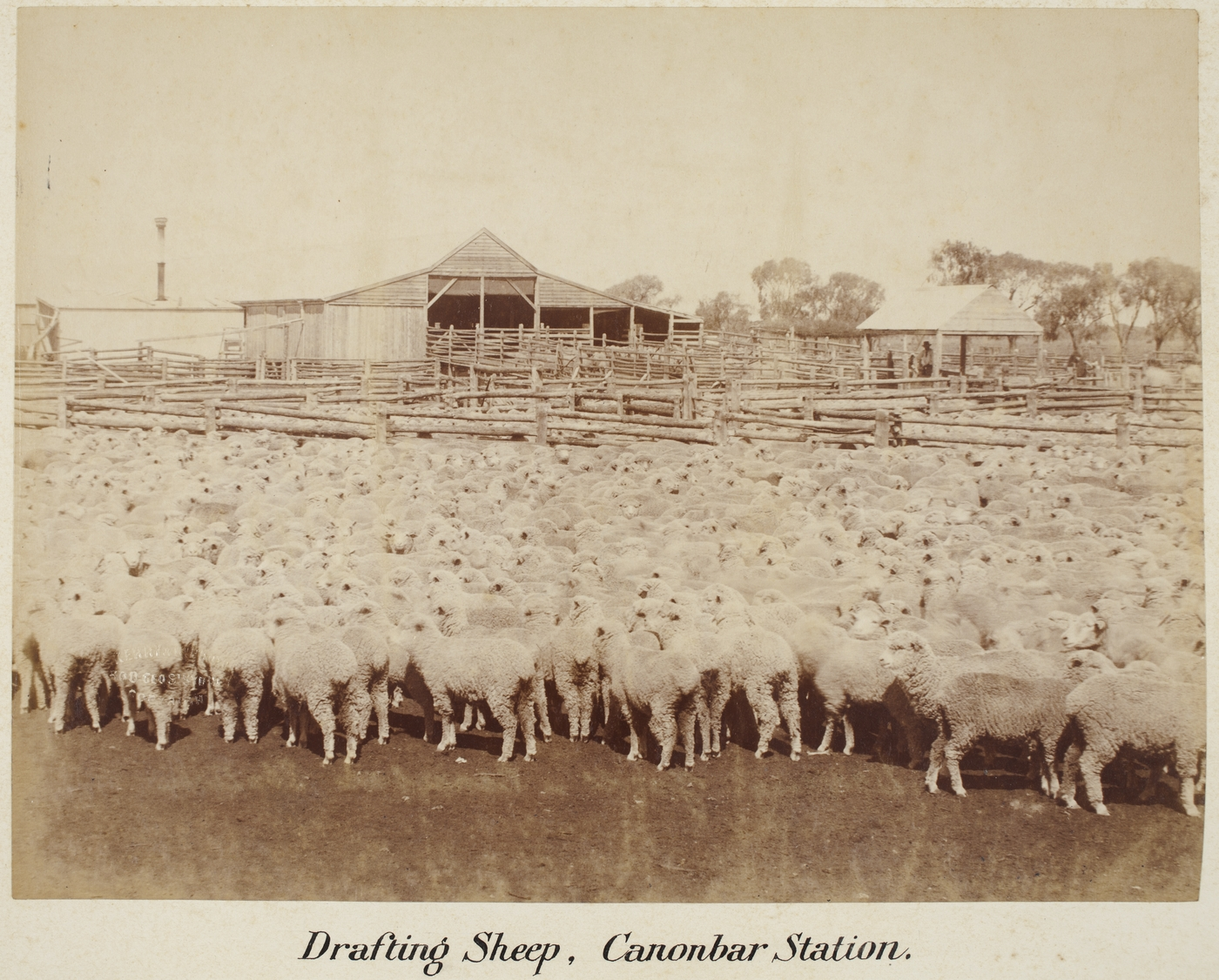 Station life | Australian agricultural and rural life