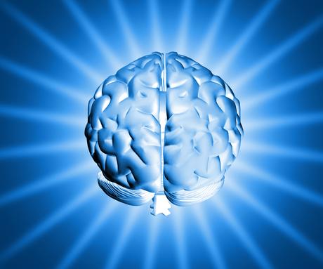 Brain  c2 a9freeimages.com. profile   artm