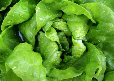 Salad 771056 1920