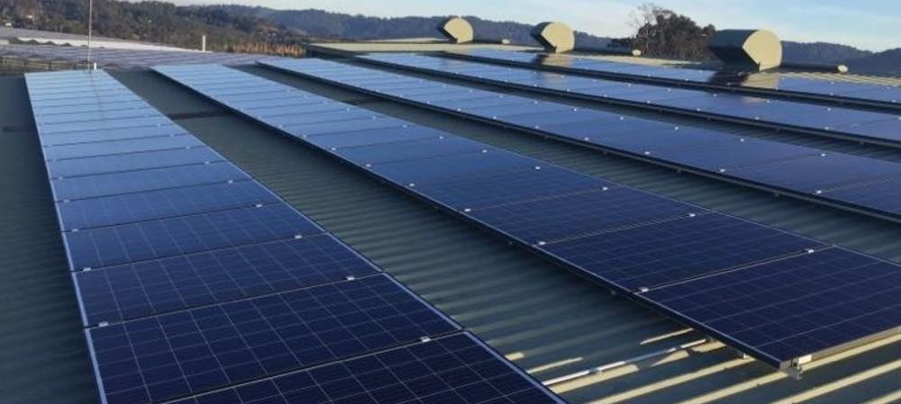 Solar success for Victorian bulb farm