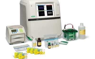 Bio-Rad ChemiDoc MP Imaging System and Starbright fluorescent secondary antibodies