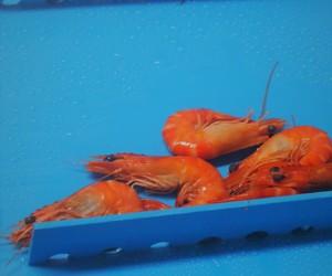 Incline prawns