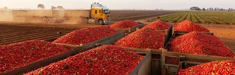 Kagome tomatoes