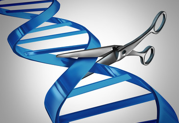 Genetic experts recommend against gene editing that culminates in human pregnancy