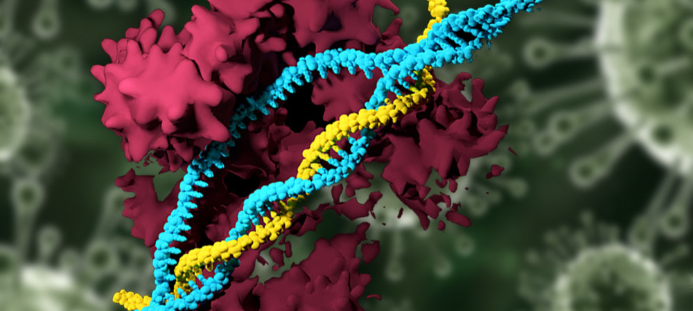 CRISPR-carrying nanoparticles can edit the genome