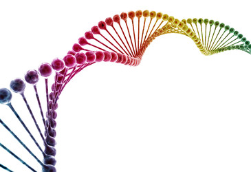 Scientists find possible genetic links to male sexual orientation