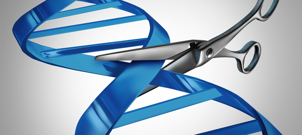 DNA scissors can cut RNA as well