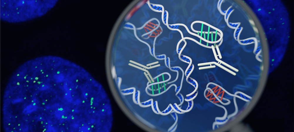 Garvan researchers find a new form of DNA
