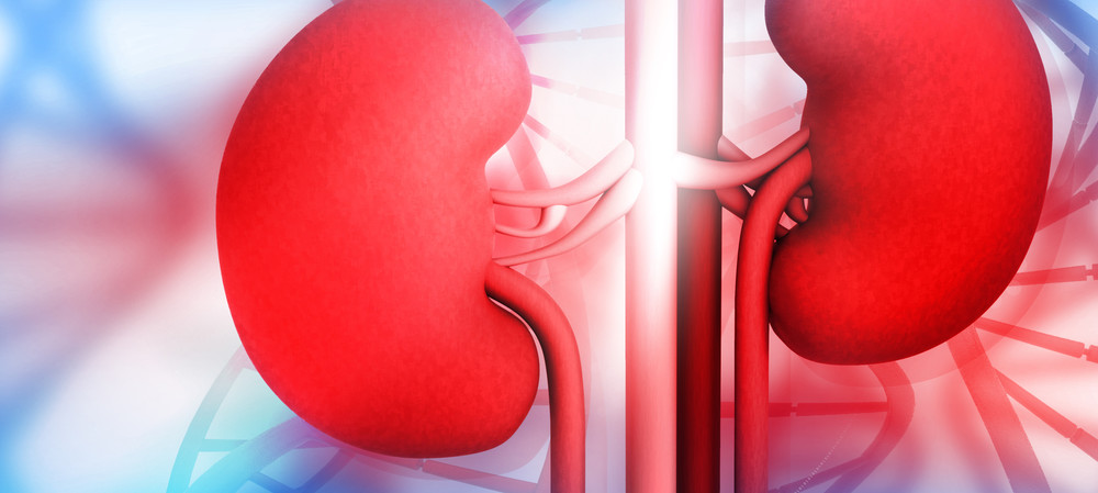 Kidney disease trial shows two drugs are better than one