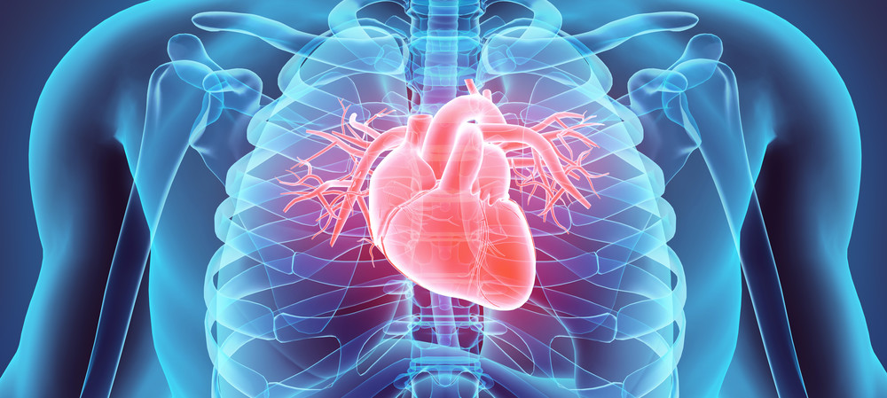 Heart disorders more common in stressful jobs