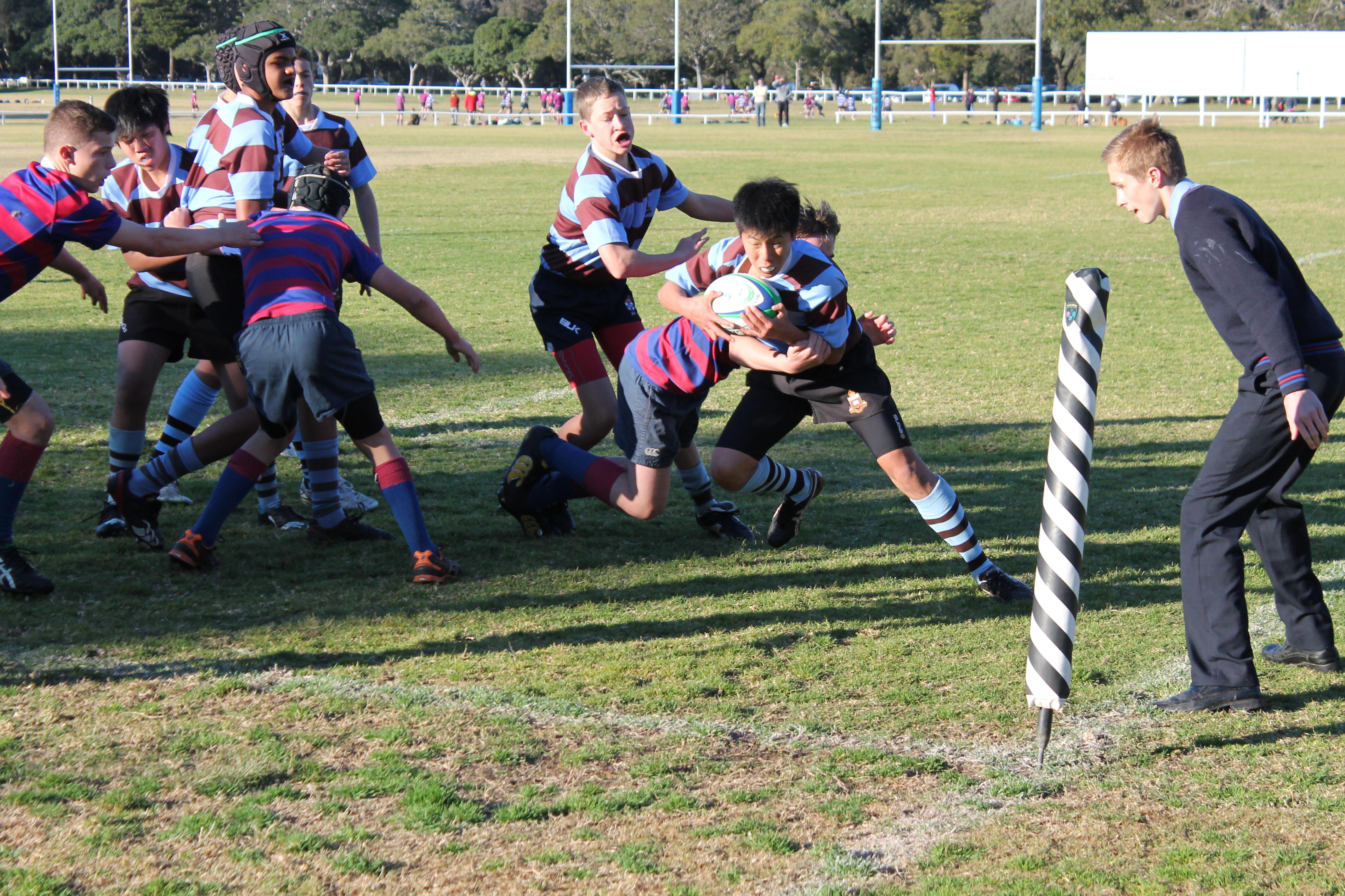 Sydney Boys Rugby Banner