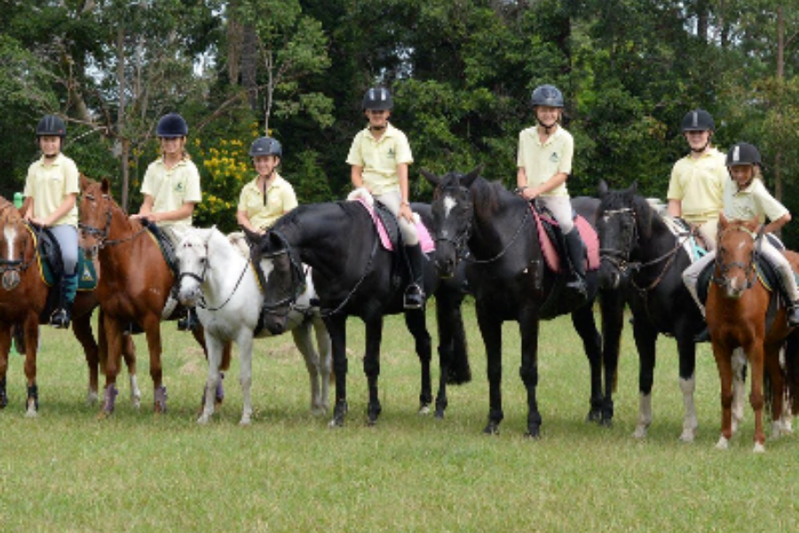 Avondale Horse and Pony Club Development Fund Banner
