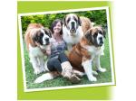 Poppins Pet Sitters - Pet sitter & Minder, Dog Boarding, Dog Walker - Gold Coast