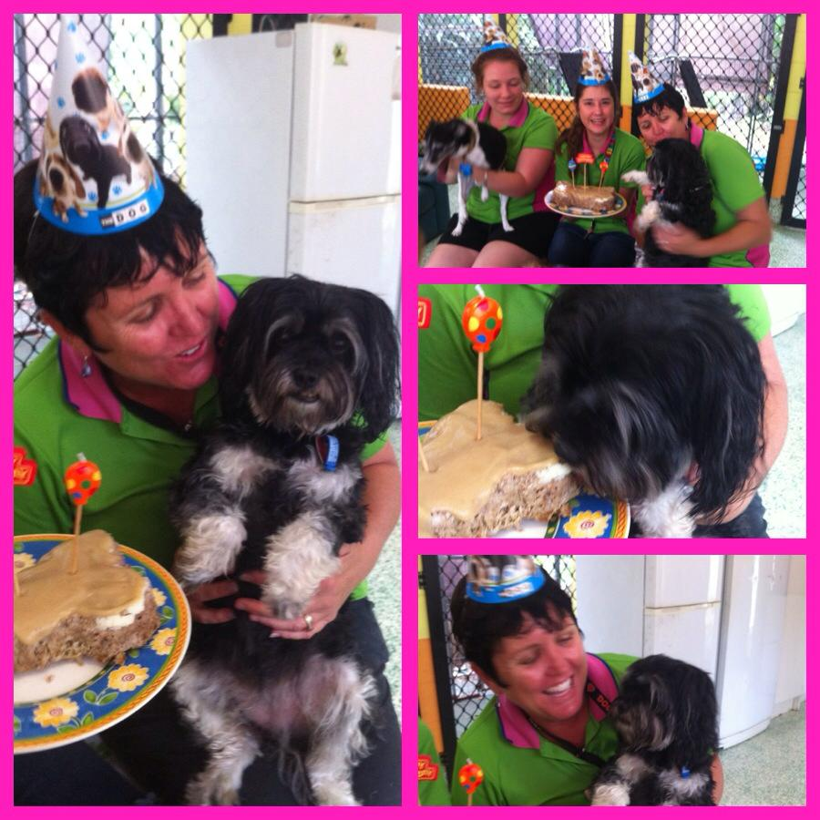Cattery dog kennels pet boarding day care spa for A perfect pet salon