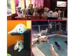 Sunshine Coast Doggy Day Care