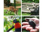 Pet Friendly Accommodation Cairns, QLD - Villa Marine - Eco Friendly