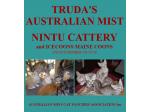 Nintu Cattery & Icecoons - Australian Mist Breeder & Maine Coon Cat Breeder - Victoria.