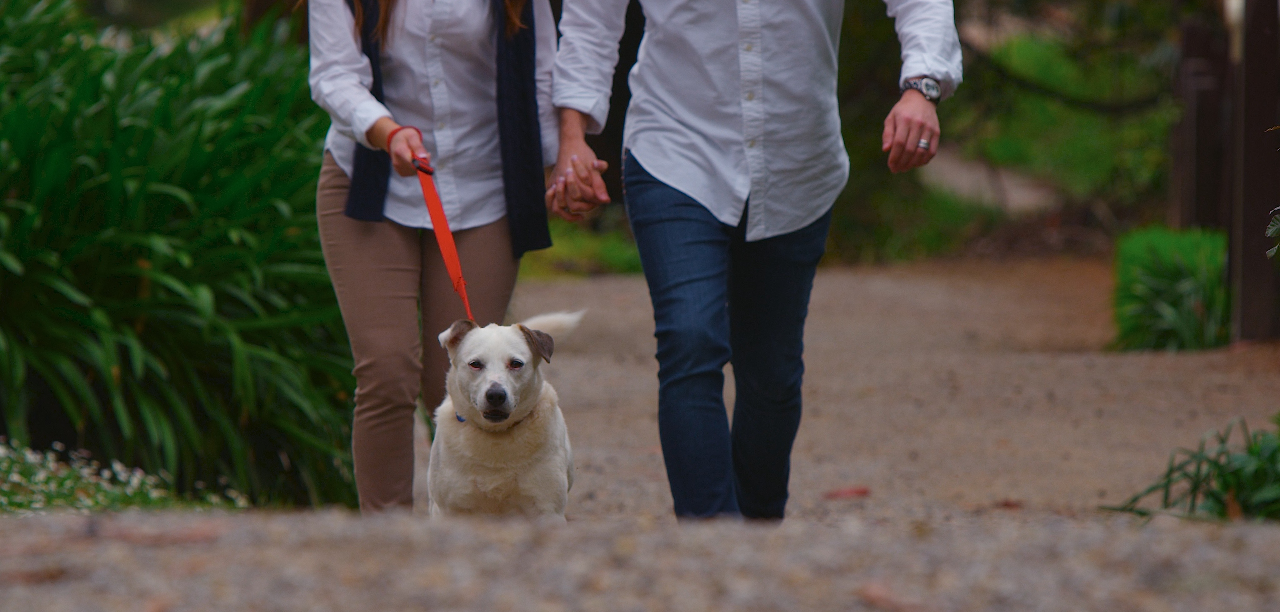 Loads of lovely walks for your dog gallery image