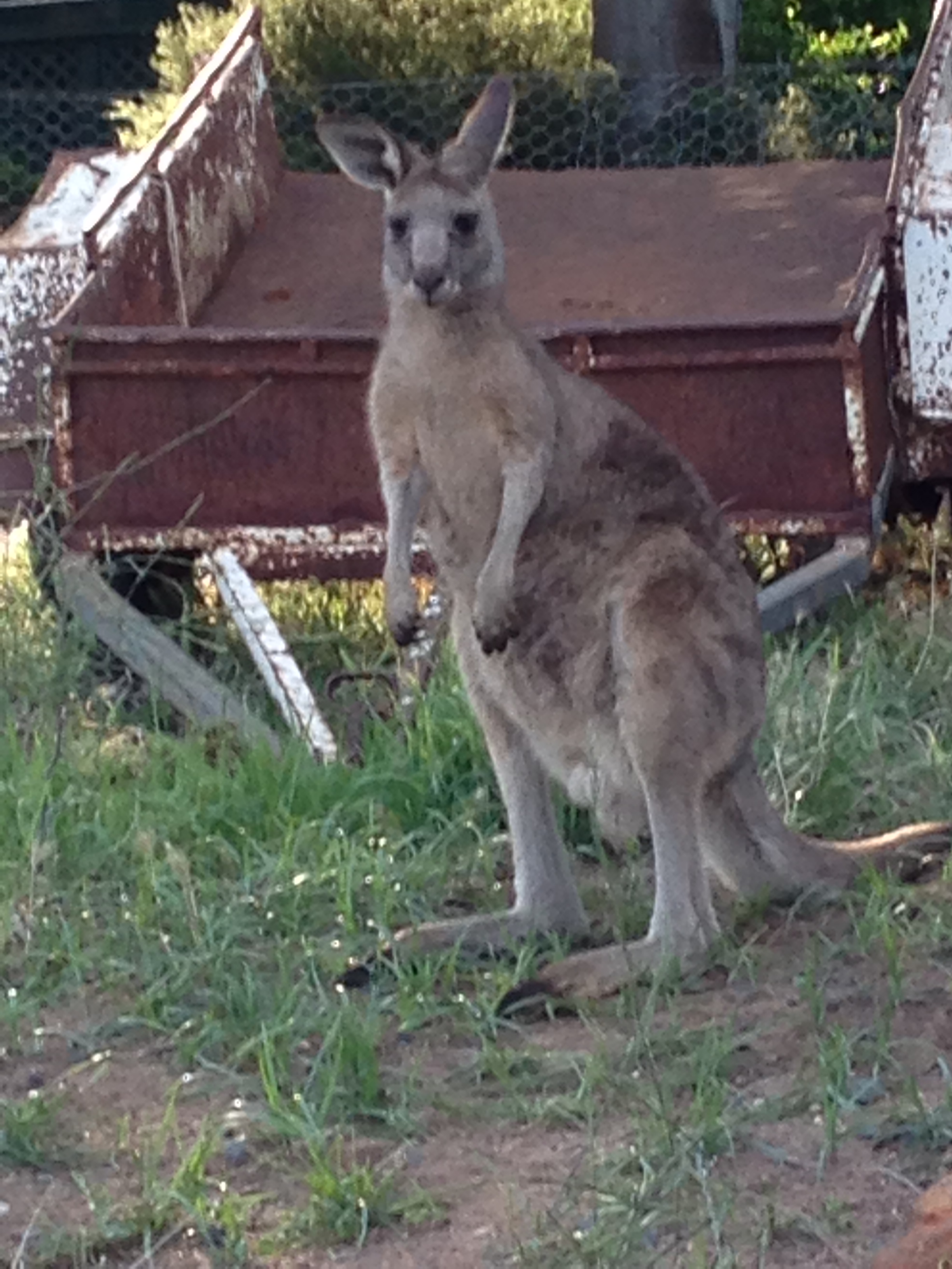 One of many roos gallery image