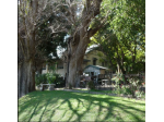 Pet Friendly Accommodation, Restaurant and Cafe - Kempsey, NSW - Netherby House -