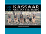 Kassaar German Shepherds - German Shepherd Breeder - Esk, QLD
