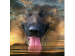 ALDERHAUS German Shepherd Dogs - German Shepherd Breeder - Perth, WA