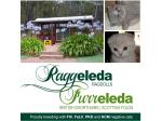 Raggeleda Ragdolls, Ragdoll Breeder - Perth, Western Australia