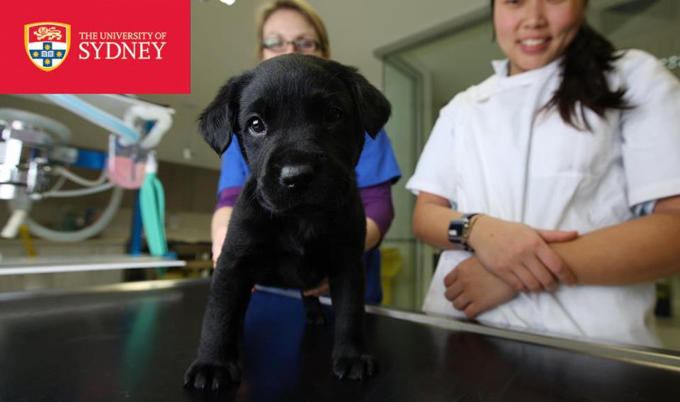 University of Sydney Faculty of Veterinary Science gallery image