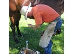 Nashama Equine - Farrier & Equine Bodyworker, Chiropractor - Lake Bathurst