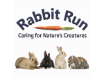 Rabbit Run - Rabbit Dating, Rabbit Minding - Melbourne