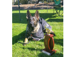 Positive k9 Training - Dog Training, Obedience Classes, Puppy School - Melbourne