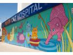 Cat Vet, Cat Boarding West Leederville - Perth Cat Hospital -